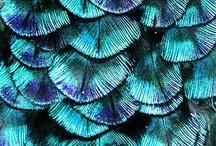 Peacock Wedding / Wat zou ik graag een bruiloft fotograferen met als thema: pauw. De prachtige kleuren blauw, groen, paars en een mooie metaalachtige glans: duidelijk en kleurrijk.