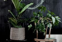 Home decor: Green & pretty fingers / Bringing a bit of green and colour indoors and out at home