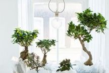 Living - Indoor Plants / by CRYgraphics