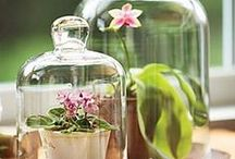 Apothecary, Cloches,Lanterns & Terrariums / Only your imagination limits what can be put under or in glass containers!