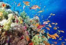 SEA LIFE - AWESOME OF ALLAH CREATION - FISH & SEA LIFE / Beautiful Fish - ALLAH Creation