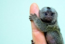 This is a baby______. That is all. / Baby animals. Cute critters.