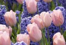 F ~ Flowers ~ Brilliant Combos !! / by Glenda Jae