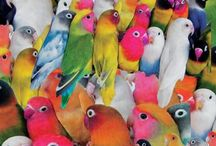 animals / by Ke Aloha Jewelry - Lisa Brodzinski