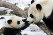 panda loves  / by Michelle Moshier