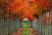 Fall .. over Fall! / by Danielle Sedio