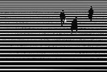 black and white lover