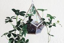 Plants & Gardening / by Mandi Gacke