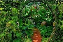 For our garden?