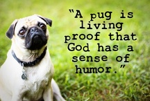 For the love of PUG / by Warinda ;P