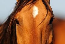 Horses / by Corie Clark