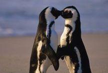 Penguin<3