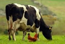 On the Farm / Everything on the farm / by Joni Fogle
