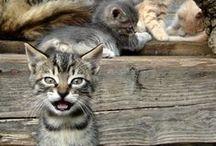 Cats Rule / by Rachel Plant