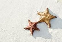 Beach, Ocean & Shells / by Annikki Rossander