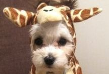 Random cuteness / A bunch of animal related stuff that makes me smile