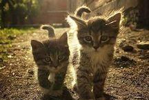 Cats / #cats #kittens #katzen #katzenmama #katzenmutti