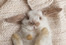 //Animaux// / Too cute not to be pinned.