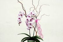 Orchid Plants & Dish Gardens
