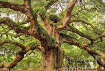 Terrific Trees / Glorious images of amazing trees all over the world during every season of the year.