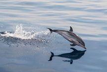 sea life / i love the ocean. / by Merlijn Mes