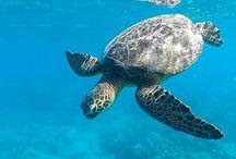 i ❤️ sea turtles