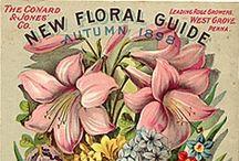 Flora / by Lisa Golden