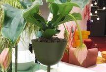 Pergolas, pots and garden design