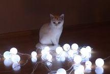 Love my cat / by Petra H. L.