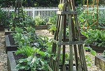 Garden and Patio Ideas / by Janice Vanerwegen