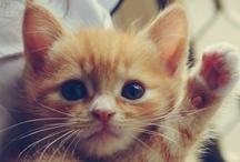 Cute Things