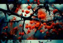 Fall Fun / by Anne Sogorka Cook