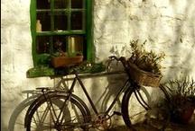 Ireland Dreaming / by Anne Sogorka Cook