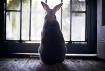 Bunnies! / by Michelle Zimmermann