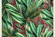 Pattern / by Gwladys Rose