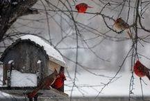 Winter White / by Anne Sogorka Cook