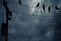 Let it rain / by Anne Sogorka Cook