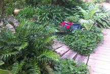Gardens / by Roni Braverman-Shaked