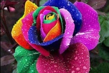 Flowers / by Vanessa Thomas