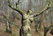 Trees / Trees and tree carvings I love :)