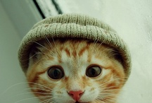 just plain ole cute