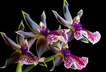 Flowers / by Rebecca Shook