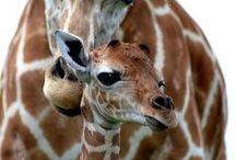 Animals♥♥♥♥♥♥