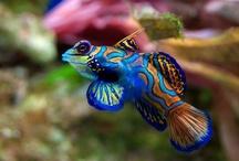 Fish & Sea Life / by Rebecca Shook