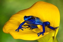 Reptiles & Amphibians / by Rebecca Shook