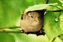 Rain / by Vic (Jane Austen's World)