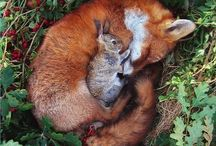 Animal Lovers☼ / Cute animals and what they get up to