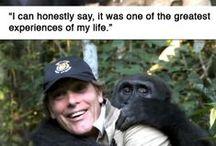 Incredible stories