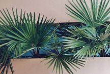 + Gardening + / by Katie Dahle