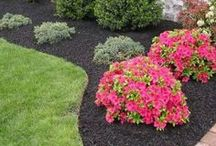 DIY   Landscaping / Landscaping is important for your home's curb appeal. Here's some great DIY projects to help you get started!